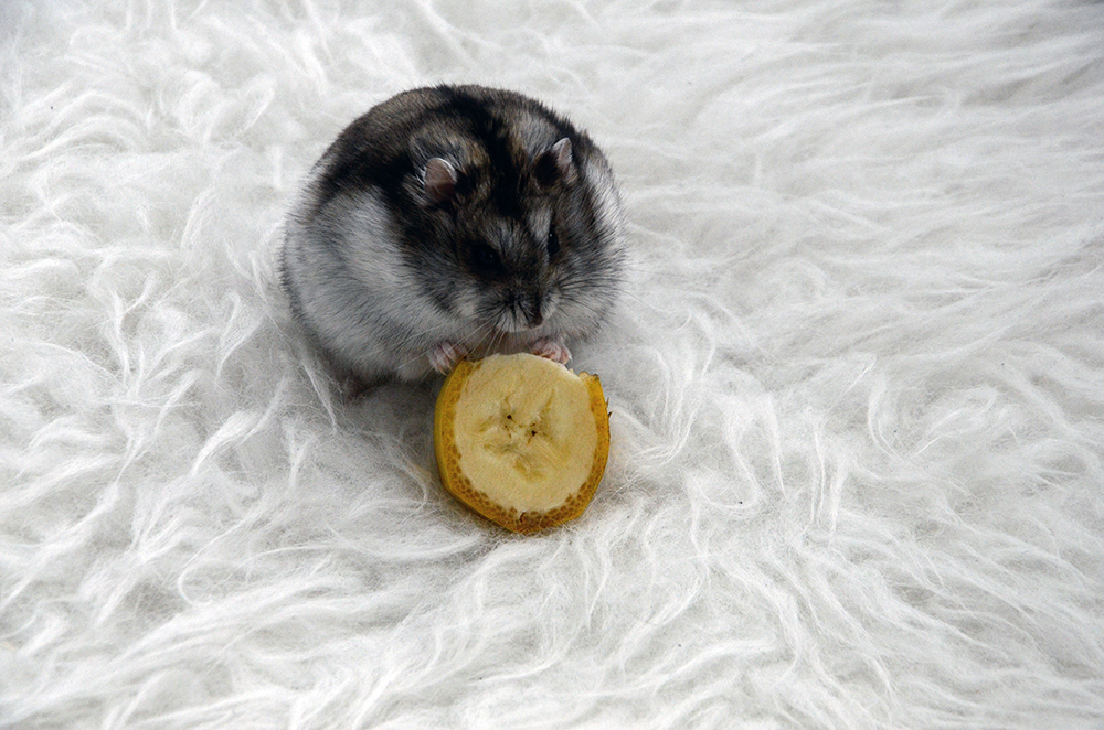 froileincouture_baconderhamster