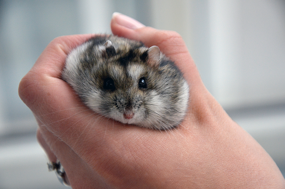 froileincouture_baconderhamster1