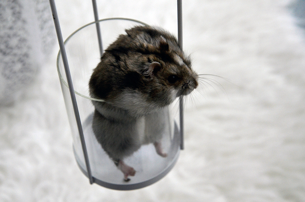froileincouture_baconderhamster2